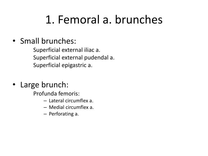 1 femoral a brunches