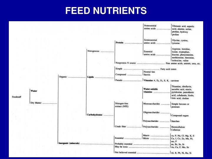 FEED NUTRIENTS