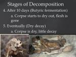 stages of decomposition4