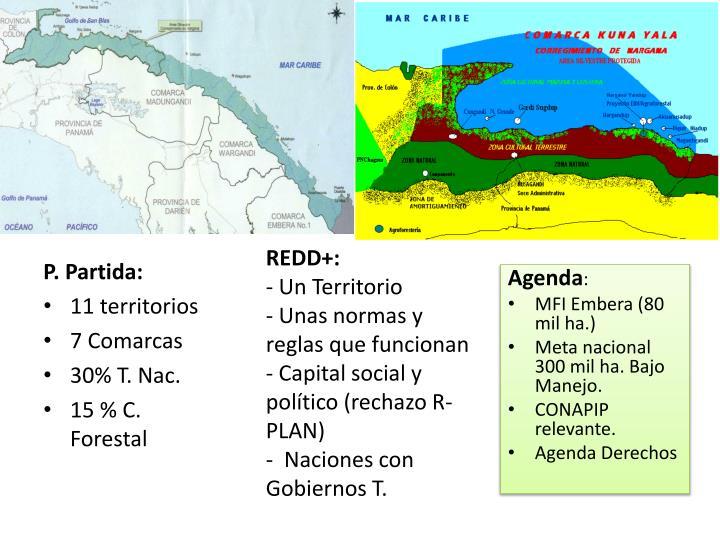 REDD+:
