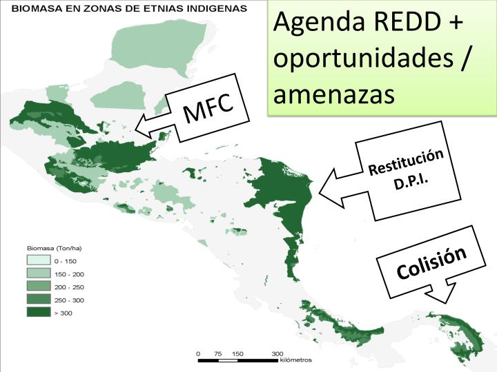 Agenda REDD + oportunidades / amenazas