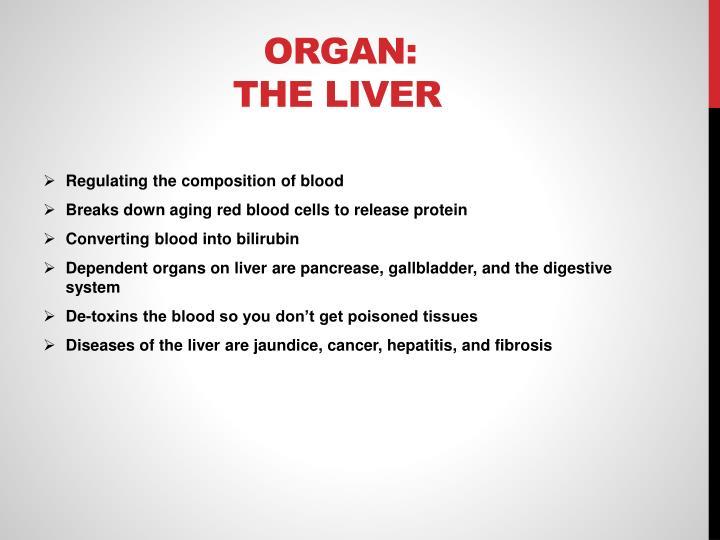 Organ:     The Liver