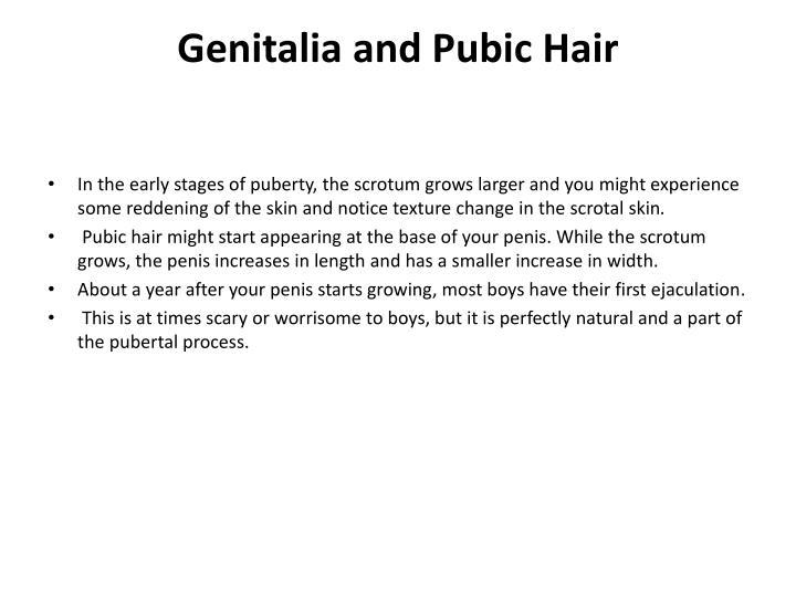 Genitalia and Pubic Hair