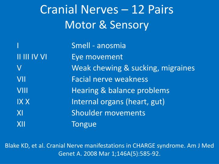 Cranial Nerves – 12 Pairs