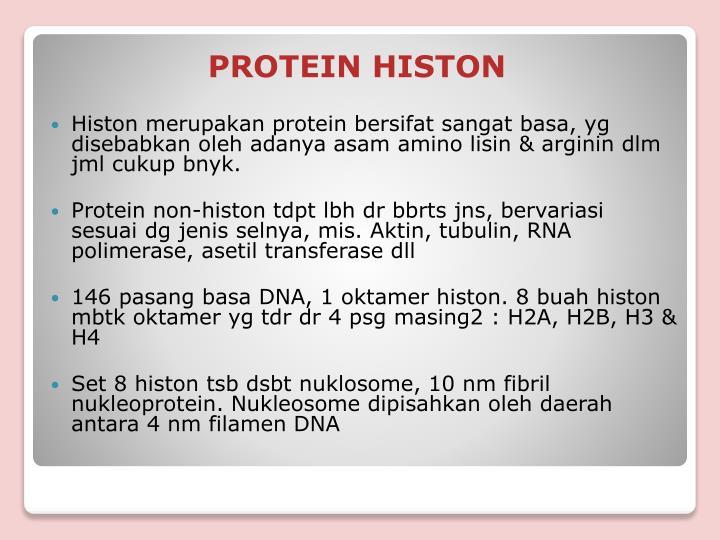 Histon merupakan protein bersifat sangat basa, yg disebabkan oleh adanya asam amino lisin & arginin dlm jml cukup bnyk.