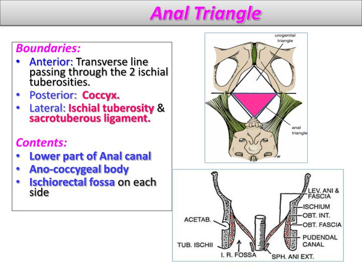 Anal Triangle