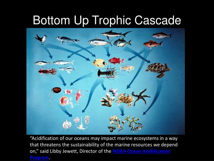 Bottom Up Trophic Cascade