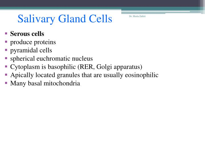 Salivary Gland Cells
