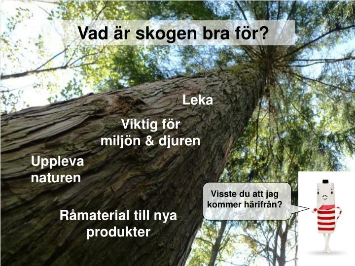 Vad är skogen bra för?
