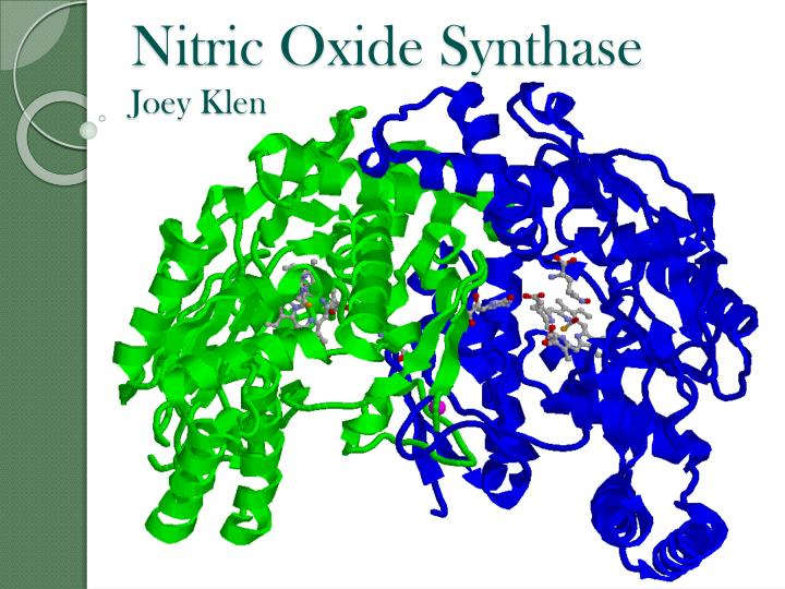 Nitric oxide synthase joey klen