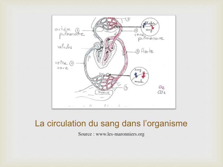 La circulation du sang dans l'organisme
