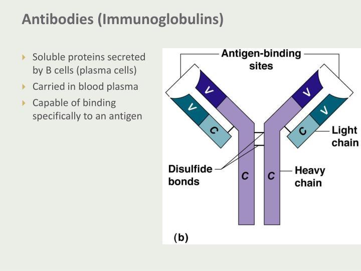 Antibodies (