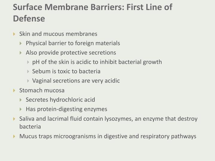 Surface Membrane