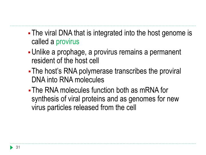 The viral DNA that is integrated into the host genome is called a