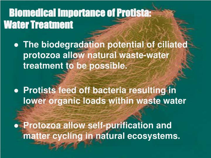 Biomedical Importance of Protista: