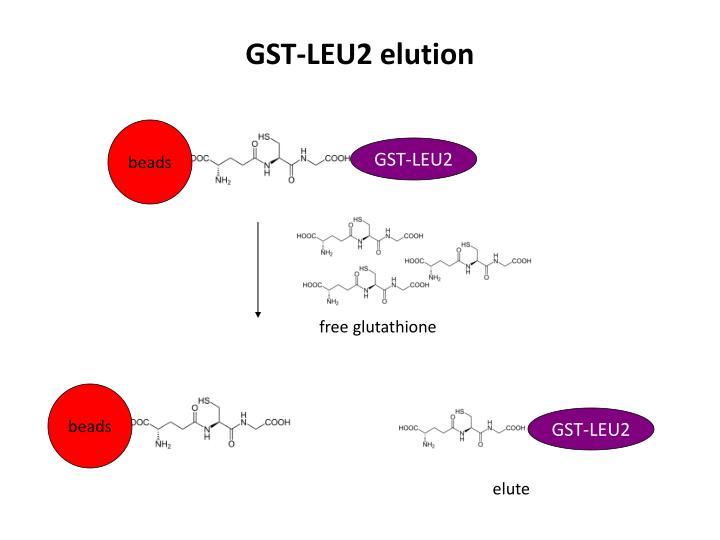 GST-LEU2 elution