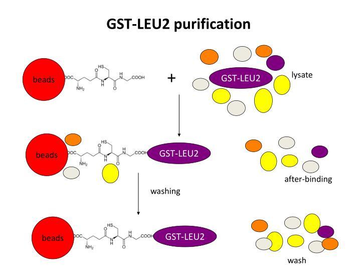 GST-LEU2 purification
