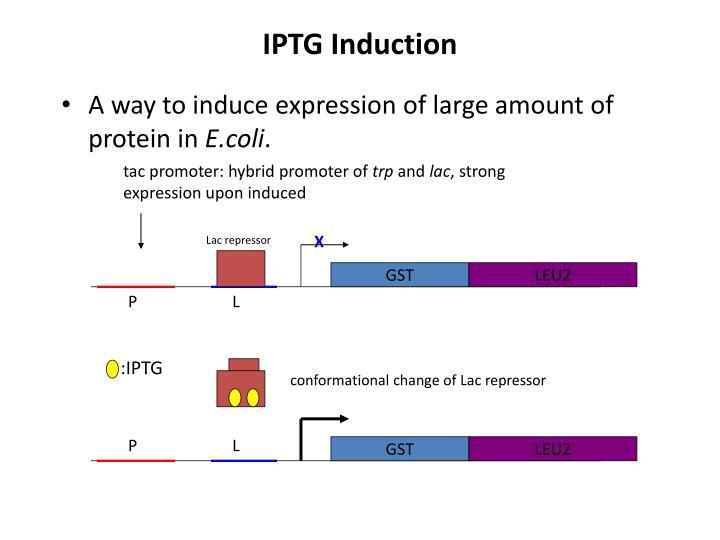 IPTG Induction