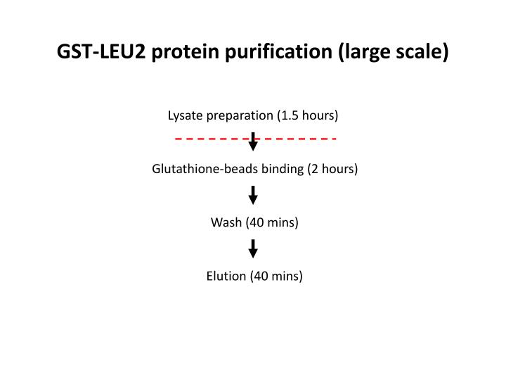 GST-LEU2 protein purification (large scale)