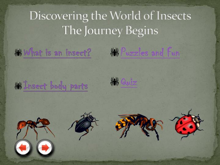 Discovering the world of insects the journey begins