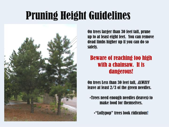 Pruning Height Guidelines