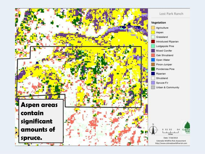 Aspen areas contain significant amounts of spruce.