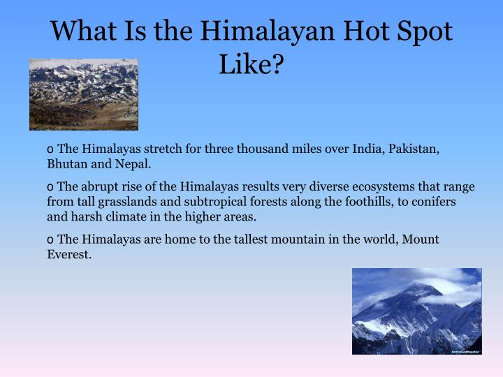 What is the himalayan hot spot like