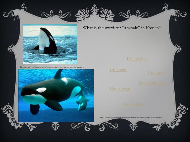 """What is the word for """"a whale"""" in French?"""