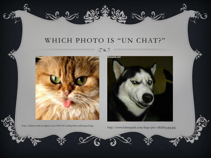 """Which photo is """"un chat?"""""""