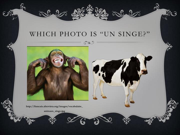 """Which photo is """"un singe?"""""""