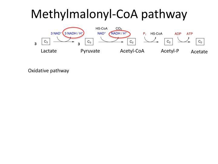 Methylmalonyl