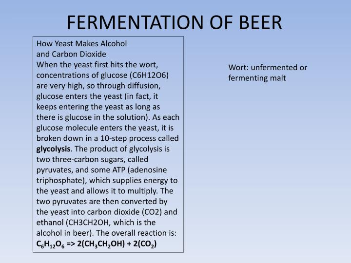 FERMENTATION OF BEER