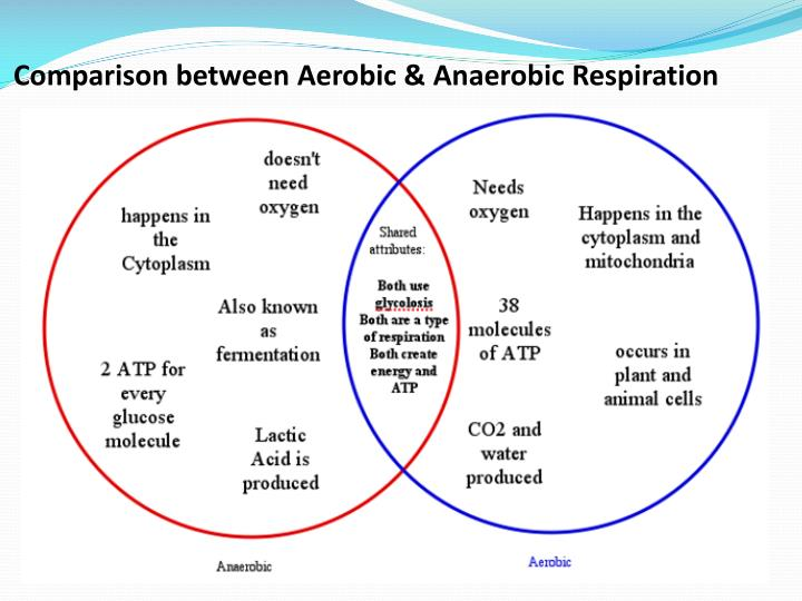 Comparison between Aerobic &