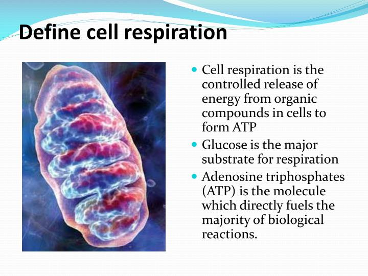 Define cell respiration