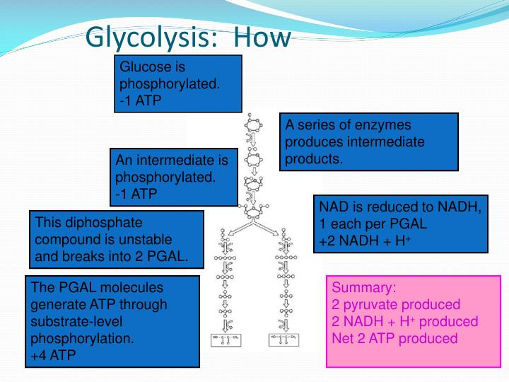 Glycolysis:  How