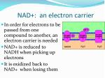 nad an electron carrier