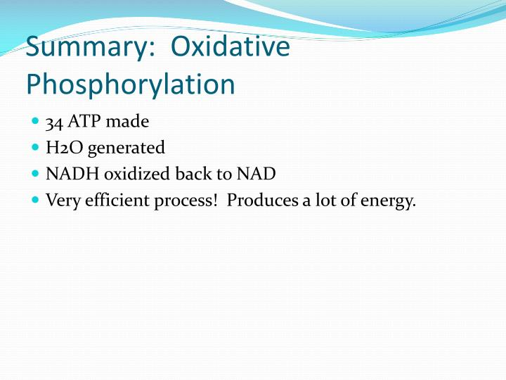 Summary:  Oxidative Phosphorylation