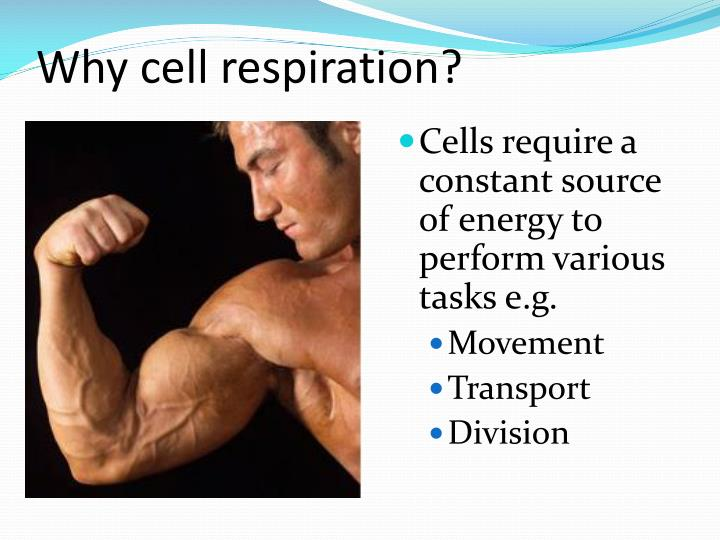 Why cell respiration