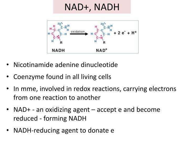 NAD+, NADH