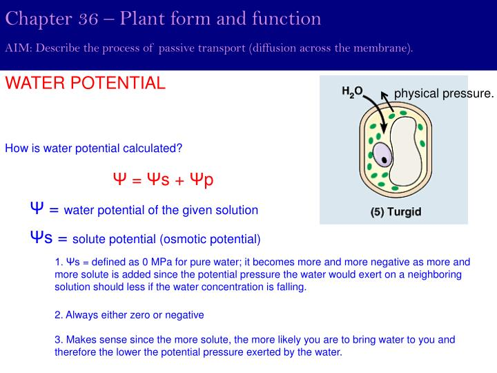 Chapter 36 – Plant form and function