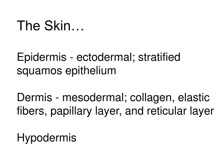 The Skin…
