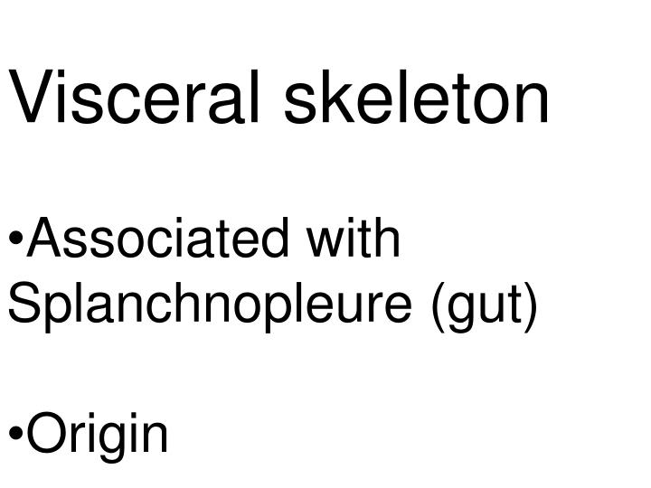 Visceral skeleton