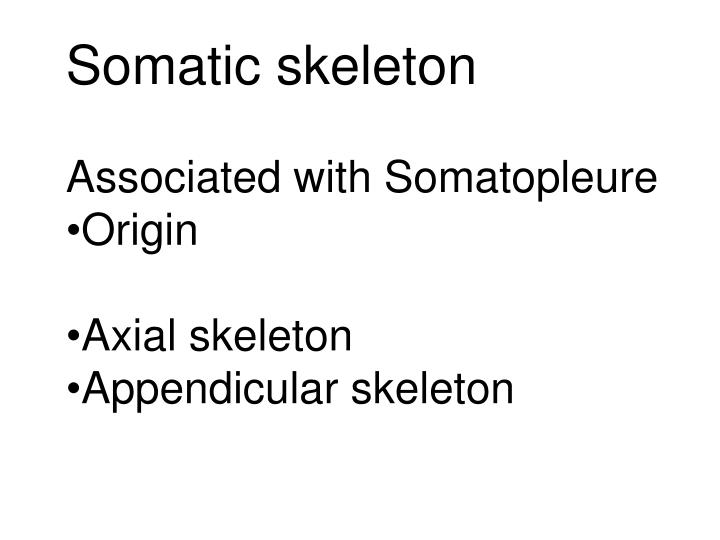 Somatic skeleton