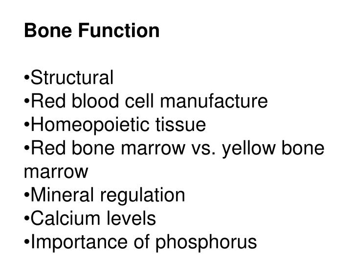 Bone Function