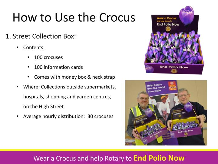 How to Use the Crocus