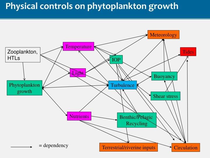 Physical controls on phytoplankton growth