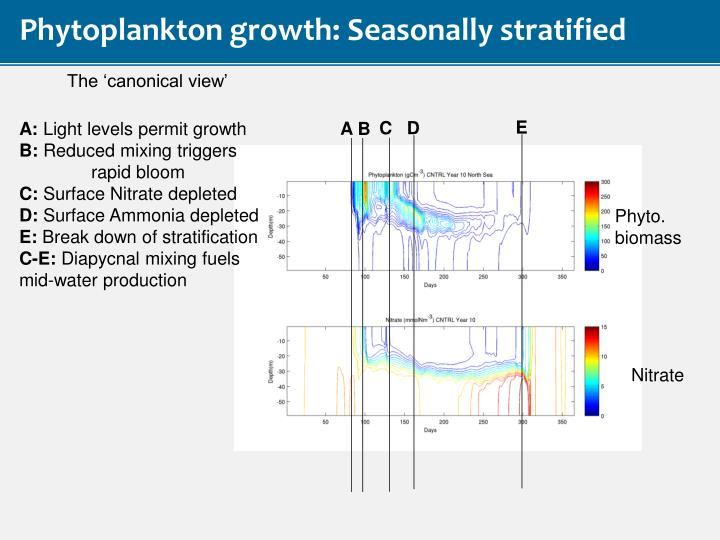 Phytoplankton growth: Seasonally stratified