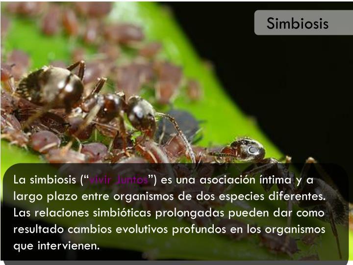 Simbiosis