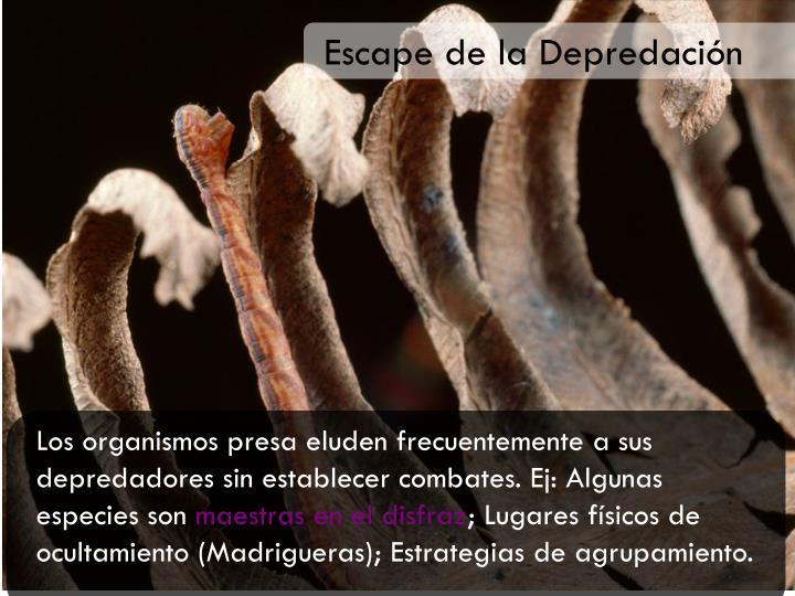 Escape de la Depredación