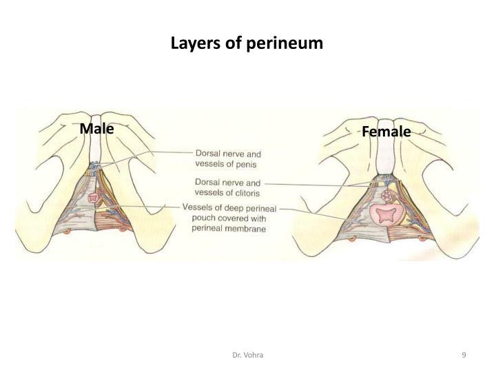 PPT - Urogenital t ria...